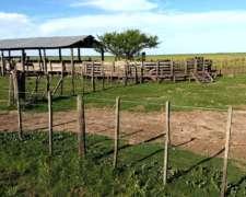 1850 Has. Ganaderas en Rincón de Nogoyá