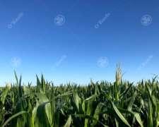 Campo 450 Has Ganadero con 20% Aptitud Agrícola