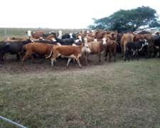 Lote 25 Vacas Gordas 420kg