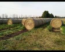Rollos de Pastura Anchos