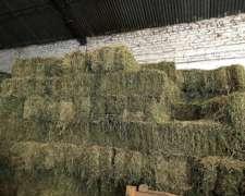Fardos de Alfalfa Pura 100% a $185