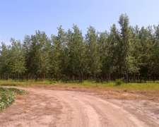 Prosefor - Produccion Y Servicios Forestales