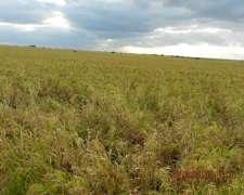 470 Has Mixtas en Gral San Martin la Pampa