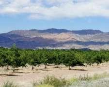 Campo Nogales. Sociedad Exportadora. Nueces Calidad Premium