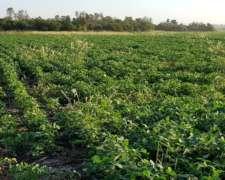 89 Hectareas Agricolas en Tres Isletas (chaco)