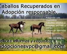 Caballos Rescatados Adopción Responsable Para Buenos Aires.