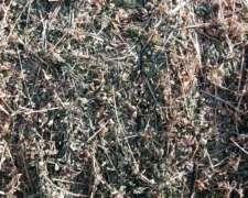 Vendo Rollos De Alfalfa De 1 Calid O Permuto Por Herramient