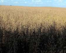Oport.vdo Campo Sobre Dos Rutas 100%agricola