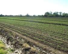 Campo Sobre Ruta 38 Tuclame 240 Ha.mixto Agrícola, Comercial