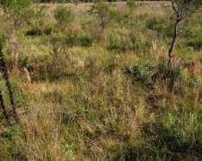 Vendo Campo en la Provincia de Corrientes