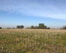 Campo en Venta en Udaondo, Cañuelas 220 Has. Mixto