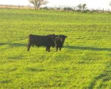 1100ha Campo para 550 Vacas -financia 2 Años