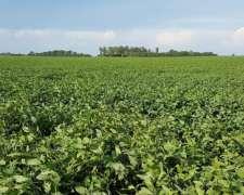 Necesitamos Campos Agrícolas para Alquilar en Prov. Buenos