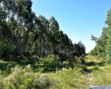 108 Has de Forestación de Eucaliptus - Federacion - E. Rios