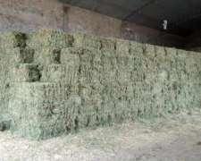 Alfalfa las Breñas Chaco 3731-628123