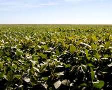 Vendo Campo Agricola Sobre Asfalto💎💣‼️don Cristobal Seguí