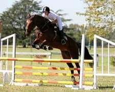Clases de Equitacion. Salto, Adiestramiento