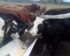 Vendo 85 Terneros de 200.kilos en Chaco