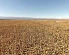 Pcia de San Luis - Merlo 411 Has