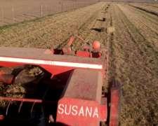 Alfalfa Pampeana Mejorada Grupo 7
