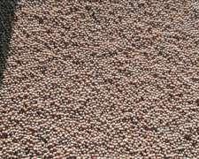Semilla Soja para Siembra a Granel