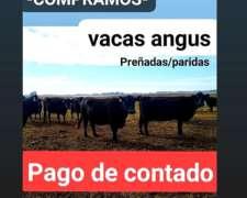 Compramos de Contado Vacas/vaquillonas Preñadas Paridas
