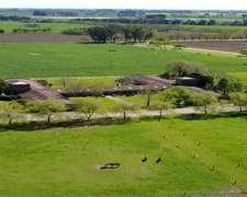 Chacra en SA Areco. 208 HA. a 1 km de Rn8. Ideal Haras