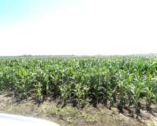 Vendo 600 Hect Agricolas en (las Breñas-chaco)