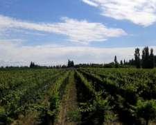 Dueño Vende Finca 5 Hs de Viñedo de Alta Calidad en Mendoza
