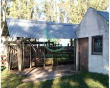 Campo Mixto en Risso - Soriano - Uruguay