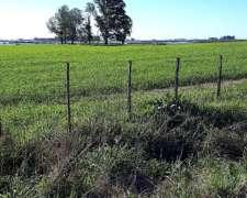 517 Agrícolas Nueve de Julio