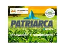 Semilla de Alfalfa Patriarca - Semillero Peman