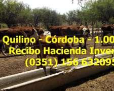 Campo Disponible en Arrendamiento para Pastoreo