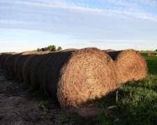 Mega Rollos de Moha
