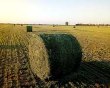 Venta De Rollos 100 % Alfalfa - Tostado- Sta Fe