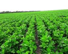 Vendo 5000 Has Agricolas Excepcionales Zona Bandera