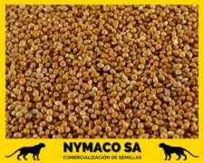 Compramos Mijo (consumo y Exportación) - Semilla