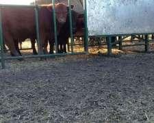 Comederos Galvanizado P/ Creep Feed (creep Feeding)