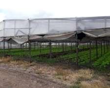 Campo en Venta Produciendo Excelente 6,5ha