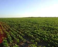Campo Mixto- Vilelas- Stgo. del Estero