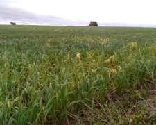 200 Hectareas De Campo Agricola