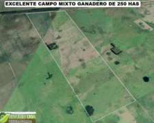 Excelente Campo Mixto Ganadero 250 Rauch. Oportunidad