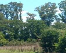 Campo Agrícola Excelente 125 Has Casa Antigua y Arboleda