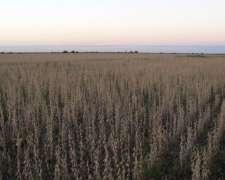 Colonia Avigdor Entre Rios Campo Agricola