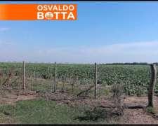 400 Has en Winifreda, la Pampa