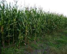 Campo en Chascomus 183 Hectáreas 70% Agrícola