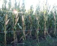 Se Alquilan 7500 H 100% Agricolas para 2021 BS AS y L Pampa