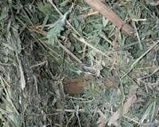 Rollos de Alfalfa Segunda Calidad