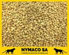 Compramos Moha (semilla y Consumo)