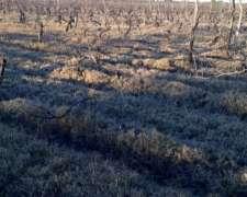 Alquilo o Vendo 10 Ha Listo para Plantación